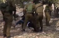 """Gideon Levy: """"Tötet sie, sie sind Freiwild"""""""